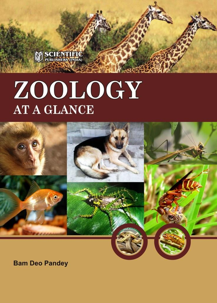 Zoology Related Keywords - Zoology Long Tail Keywords ...